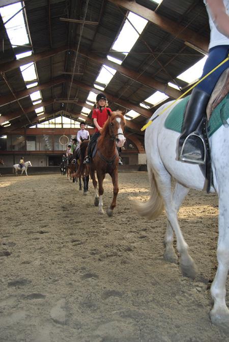 Paardenkamp De Hoefslag Manege En Pensionstal